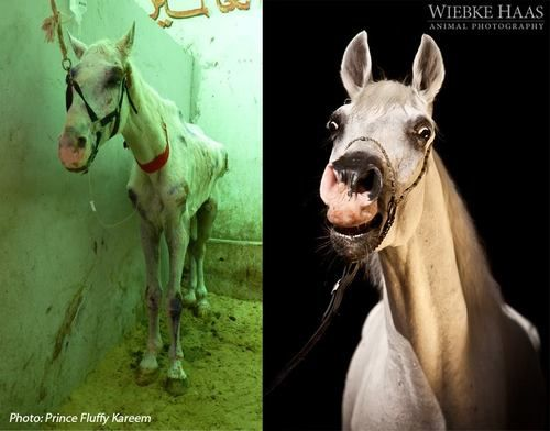 Choose a rescue horse and find a gem.