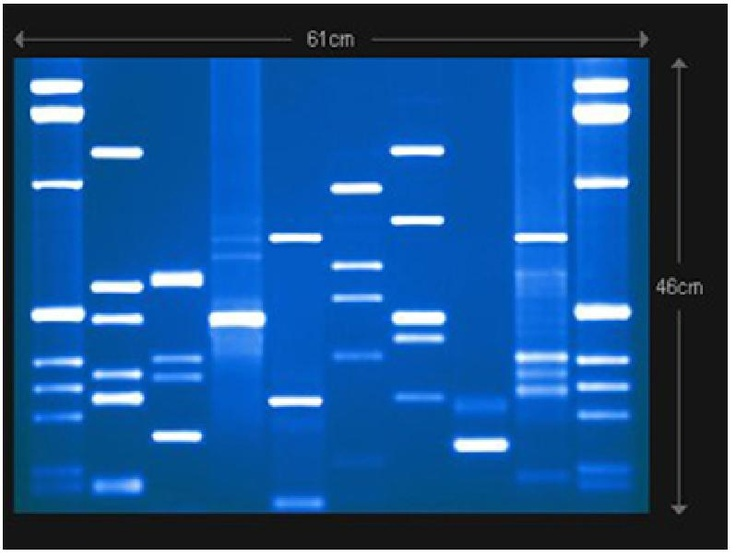 DNA... One thing i miss about being a bio major is cloning DNA and studying genetics... It's truly fascinating