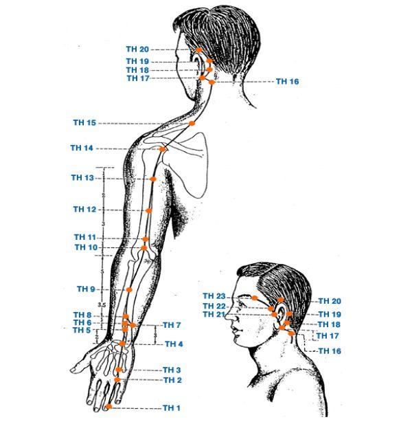 Меридиан трех обогревателей - Triquetra Технологии Здоровья|Традиционная китайская медицина и цигун