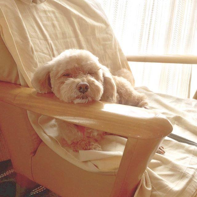 . 🔅🐶🐶🔅 「みいちゃん東京で元気にしてるかな。ボク、ウィンク上手でしょ!!」っていうlineが送られてきた。 ふつうにくうちゃん可愛いけど、そういう内容のlineを送るお母さんもなんか可愛いと思った。笑笑 . #愛犬#ウィンク#いやただ眠いだけやろなw  #mypet#wink#cute