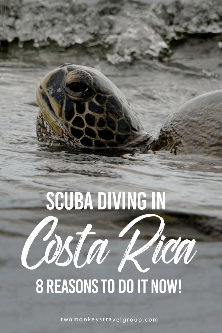 SCUBA Diving in Costa Rica - 8 Reasons to do it now! Of all the popular dive locations in the world, there is one that doesn't receive the same amount of hype and attention as the rest and yet it has so much more to offer – SCUBA Diving in Costa Rica will open your eyes to a whole new level of underwater exploration.