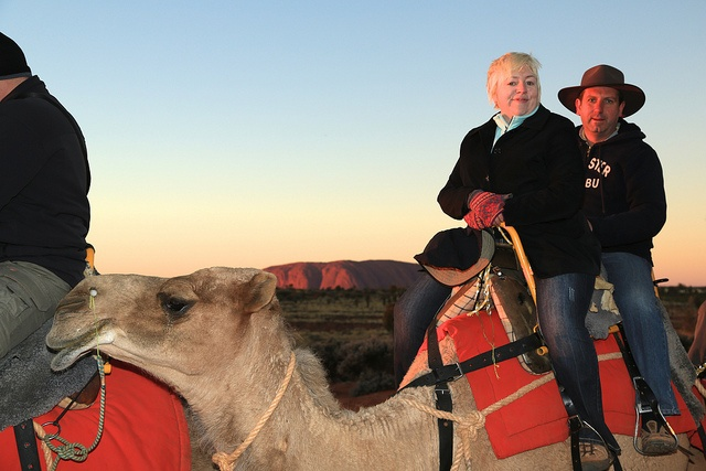 I rode a camel at Uluru! It was surprisingly relaxing.
