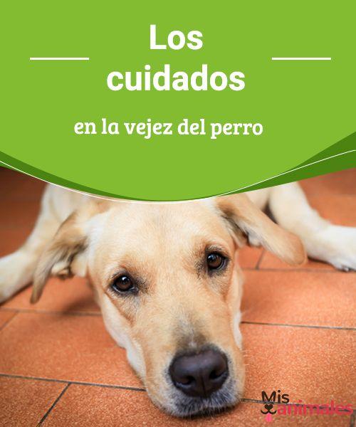 Los cuidados en la vejez del perro -Mejor con Mascotas  Desde Mejor con Salud queremos enseñarte los cuidados en la vejez del perro, ya que es la etapa en la que más cuidados necesita, sobre todo el cariño. #cuidados #perro #vejez #consejos