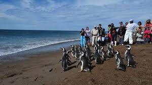 Península Valdez, Patagonia, Argentina.