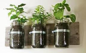 coltivare erbe aromatiche in casa - Cerca con Google
