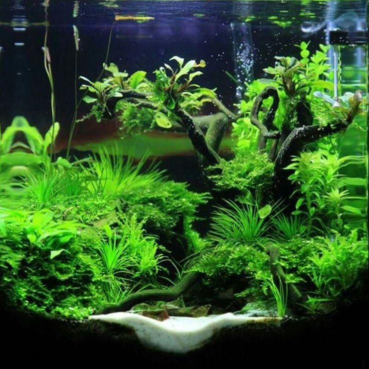Aquascape Plants For Sale: Aquariums, Glass