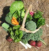 Cool Season Vegetable Collection
