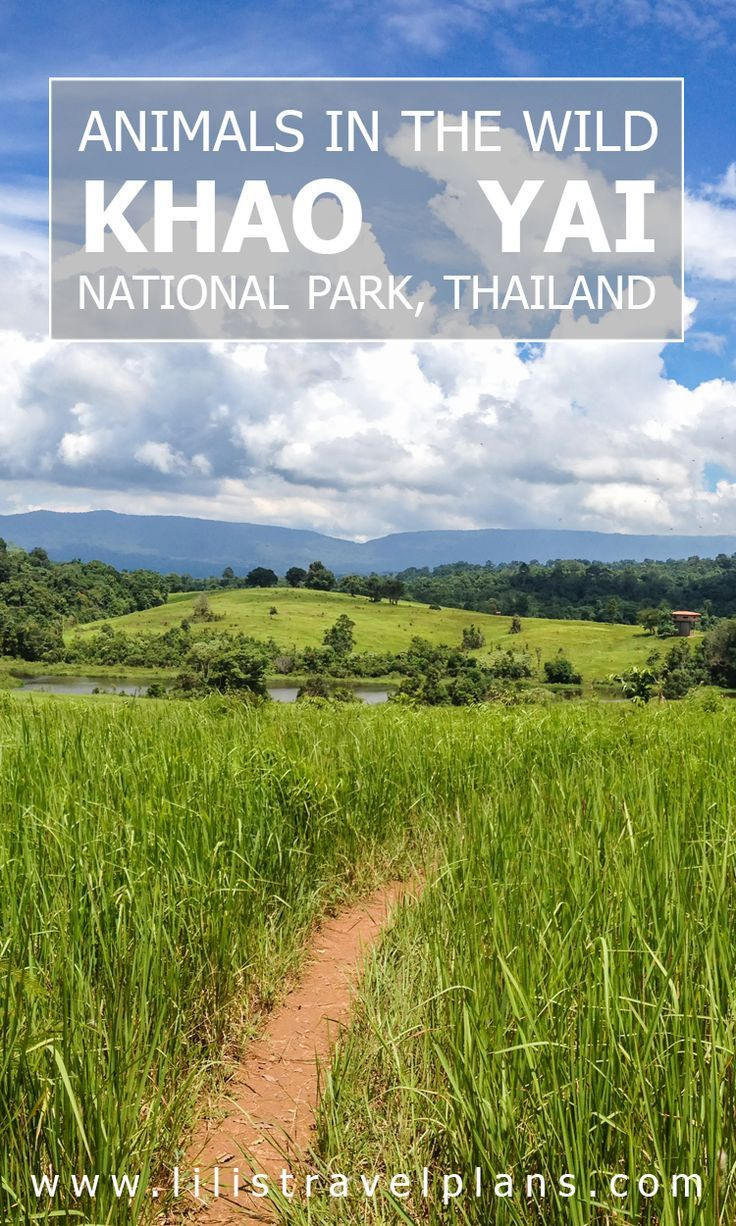 Looking for wild animals in Thailand - Khao Yai national park