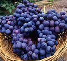 List of High Fiber Foods (Fruits, Vegetables, Whole Grain Foods)