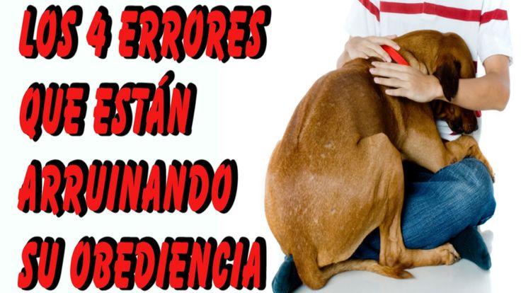 4 Errores que Cometes al Entrenar a tu Perro que Arruinan su Obediencia
