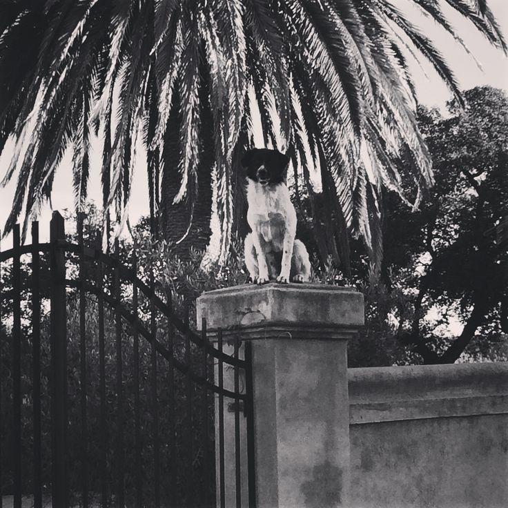 Dog guard