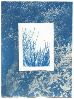 Cyanotype collage Maddy young, 2015