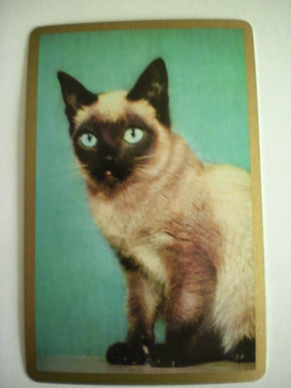 playing cards with pictures of cats on | playing cards