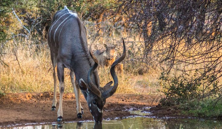 Discover More — Warthog Lodge, holiday home rental |Situated in Mabalingwe Nature Reserve | Bela-Bela, Limpopo, South Africa |