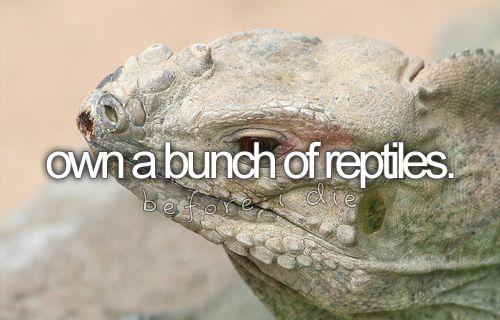 .: Boxes Turtles, Bucketlist, Beards Dragon, Lists Buckets Lists, Die Buckets, Bearded Dragon, Crests Geckos, Amphibians, Box Turtles
