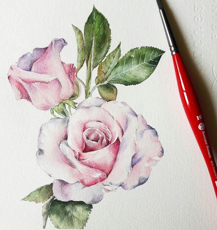 My roses watercolor