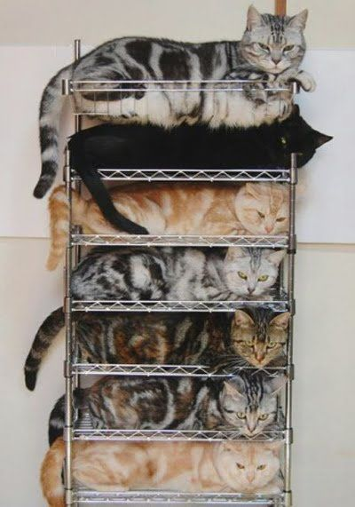 "Organizing Your Cats: JUST LEFT Walmart with my new shelf - it's ""purrfect"" LOL. Hope my new friends will like it. Kim does. #GIRLSGOOGLEHANG"