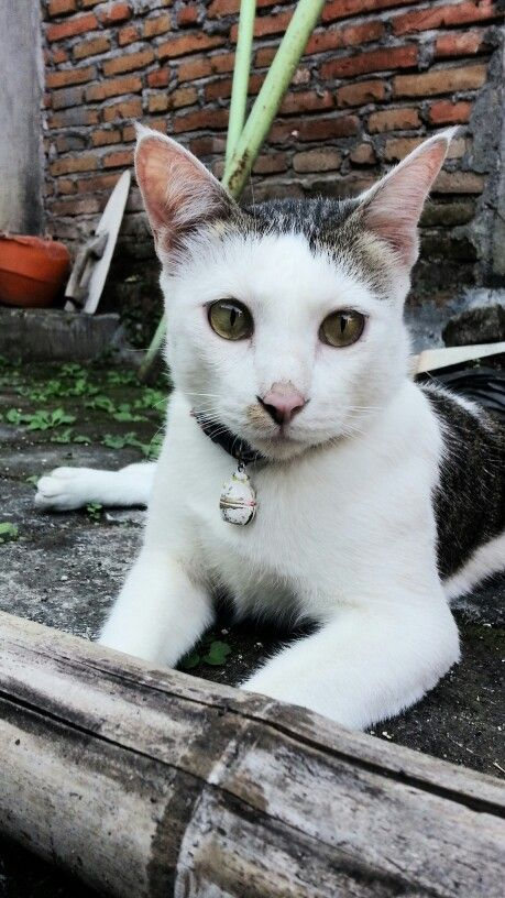 Omen #cat #pet