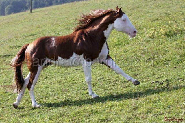 31 best images about Horse Color: Splash White on ...   640 x 426 jpeg 67kB