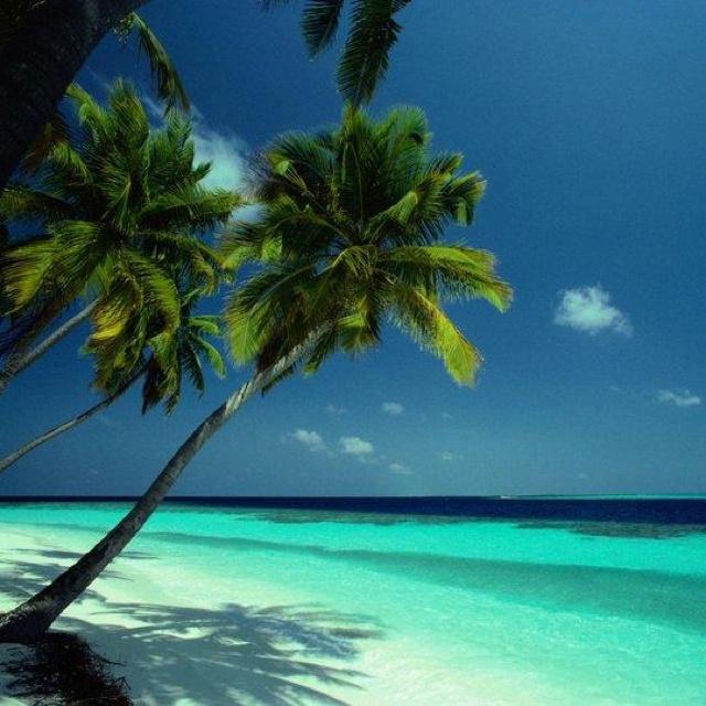 Fiji Beaches: Nature & Ecology