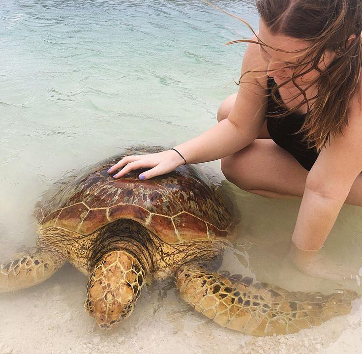 Turtle Sanctuary - Port Vila, Vanuatu
