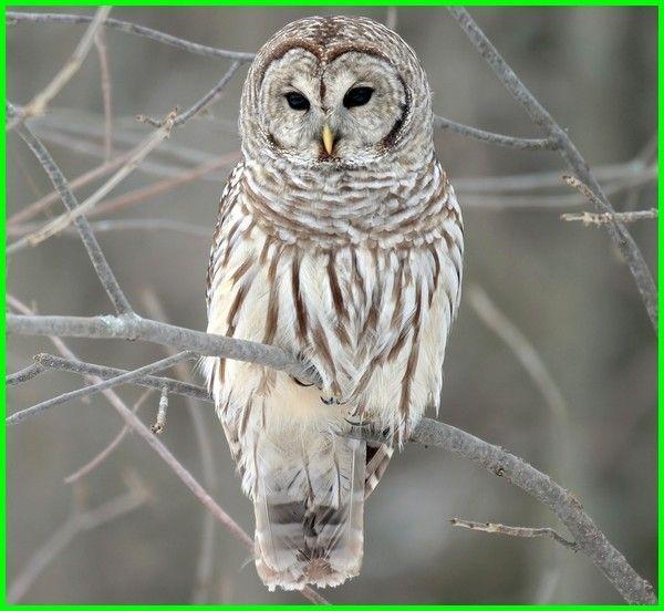 Daftar Burung Paling Berbahaya Di Dunia Dunia Fauna Hewan Binatang Tumbuhan Boneka Burung Hantu Burung Hewan