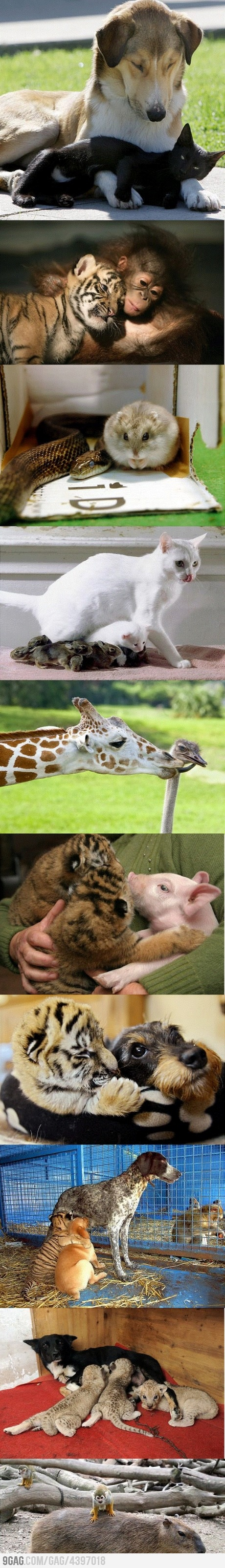 Some Unexpected Friendships: Animal Friendship, Unexpected Friendship, Unusual Animal, Cute Animals, Odd Couples, Funny Animal, Baby, Things, Tigers Cubs