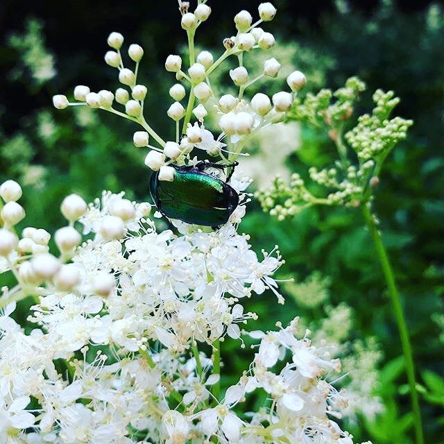 The colours of the nature #nature #insects #photography  #photographer : @_tudor_costache_ -------- #boostingromania #promovezromania #ig_romania #transylvania #romaniamagica #szeklerland #travel #explore #discover #travelingram #instapassport #firefly