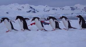 De witte wondere wereld van Antarctica... Met alle schattige dieren!