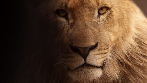 Lions 101 Fun Lion Facts and Information for Kids Children #Lions #Africa #Lionesses