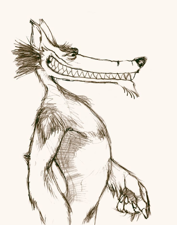 pencil - drawing - wolf - Giuseppe Santoro