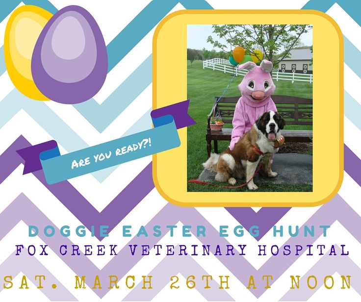 http://foxcreekveterinaryhospital.com/events/6th-annual-doggie-easter-egg-hunt/?preview=true&preview_id=1947&preview_nonce=1e051b2734