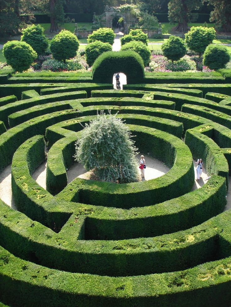 Chatsworth maze garden in England. Weird dream to go into a maze garden.
