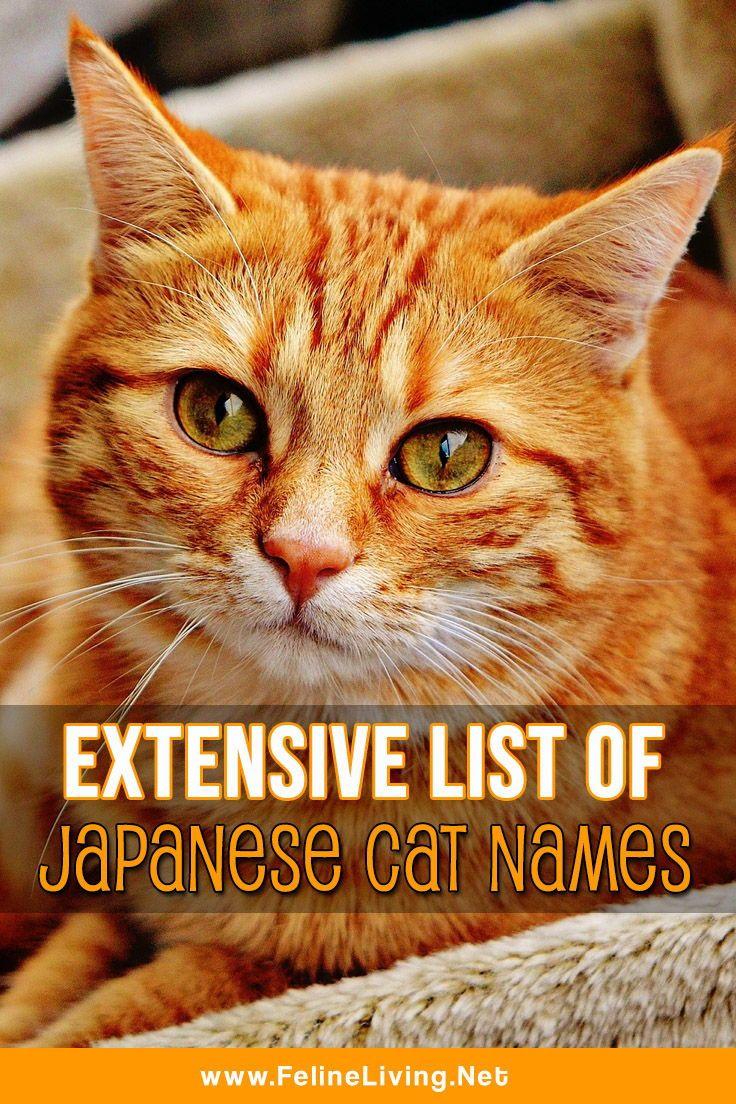 Felineliving Net Cat Care Cats Orange Tabby Cats