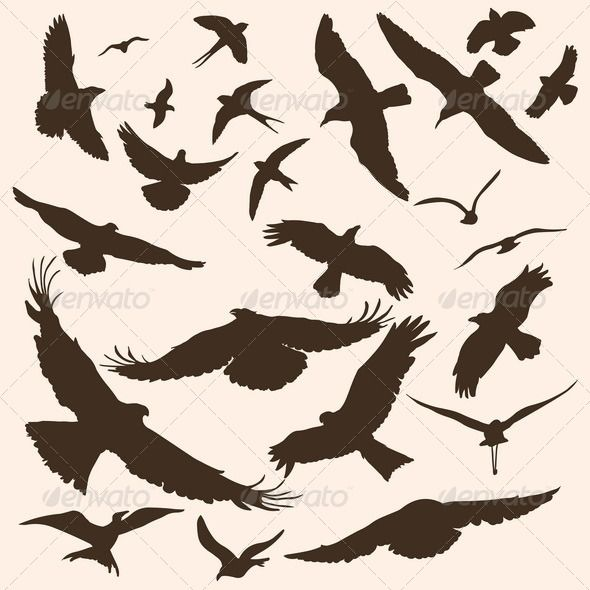 Vector Silhouettes of Birds - Animals Characters