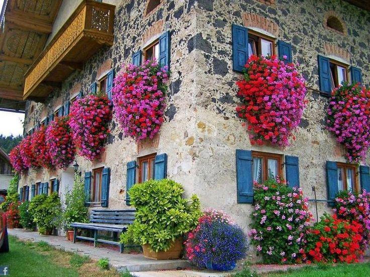 Gerani parigini, fiori da balcone pendenti