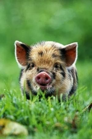 Child Pig by Divonsir Borges