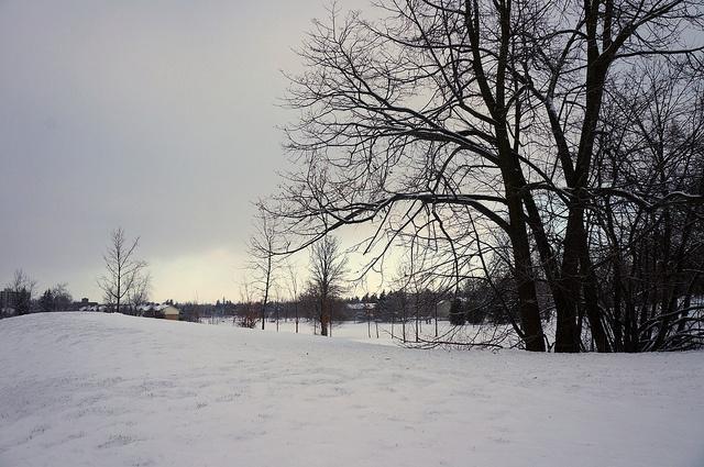 W E Hamilton Park