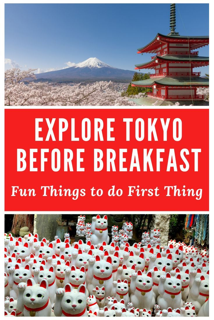 15 Cool Things To Do In Tokyo In The Morning Differentville In 2020 Japan Travel Destinations Japan Travel Tips Fun Things To Do