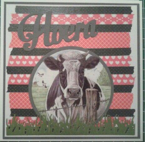 Hoera - koe