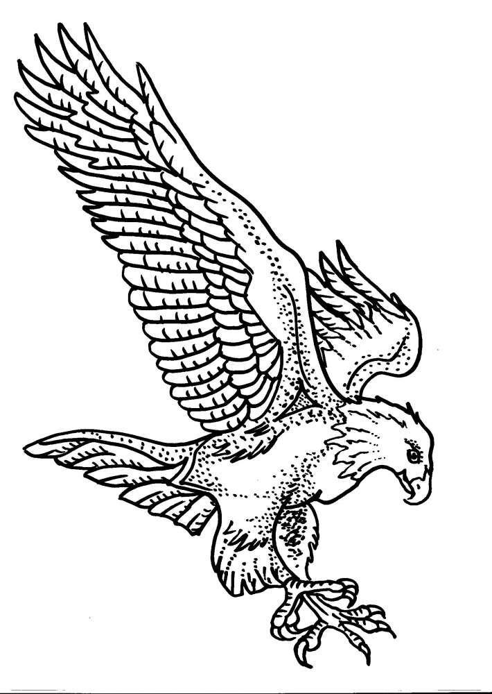 обеденного рисунок орла в полете минах, применяемых