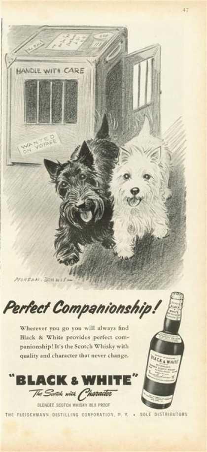 Black & White - Perfect Companionship