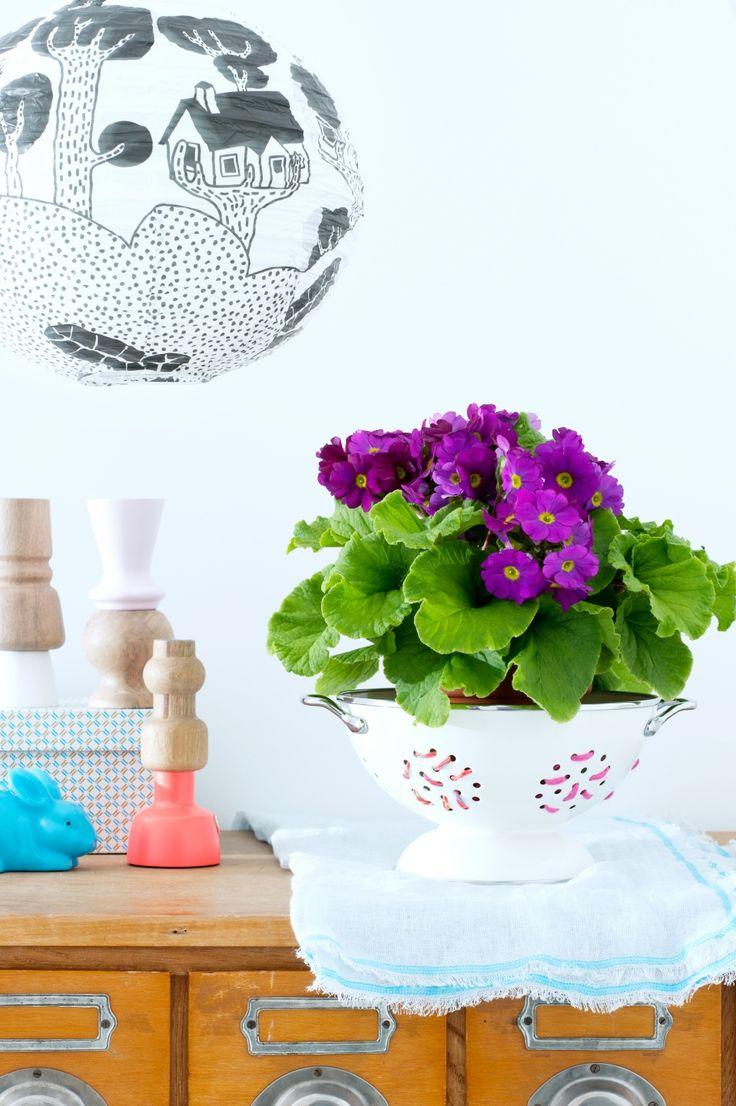 Flower Council Holland Joy of Plants
