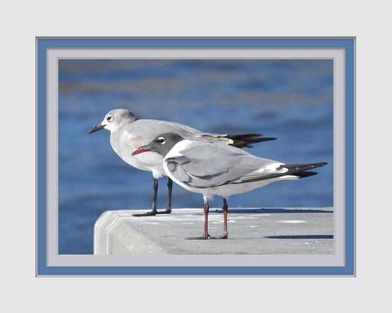 Wall Art Gift for Wedding, Anniversary, Birthday. Fine Art Photo. Sea Gulls Resting. Printed Triple Faux Mat. Fits into a 8x10 inch Frame.