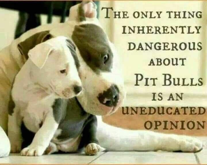 Pin By The Dead Daisy Artist On Staffies Give The Best Cuddles Pitbulls Pitbull Terrier Pitbull Quotes