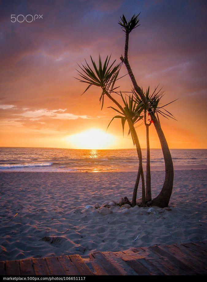 Sun Tree - Gallipoli beach - Puglia
