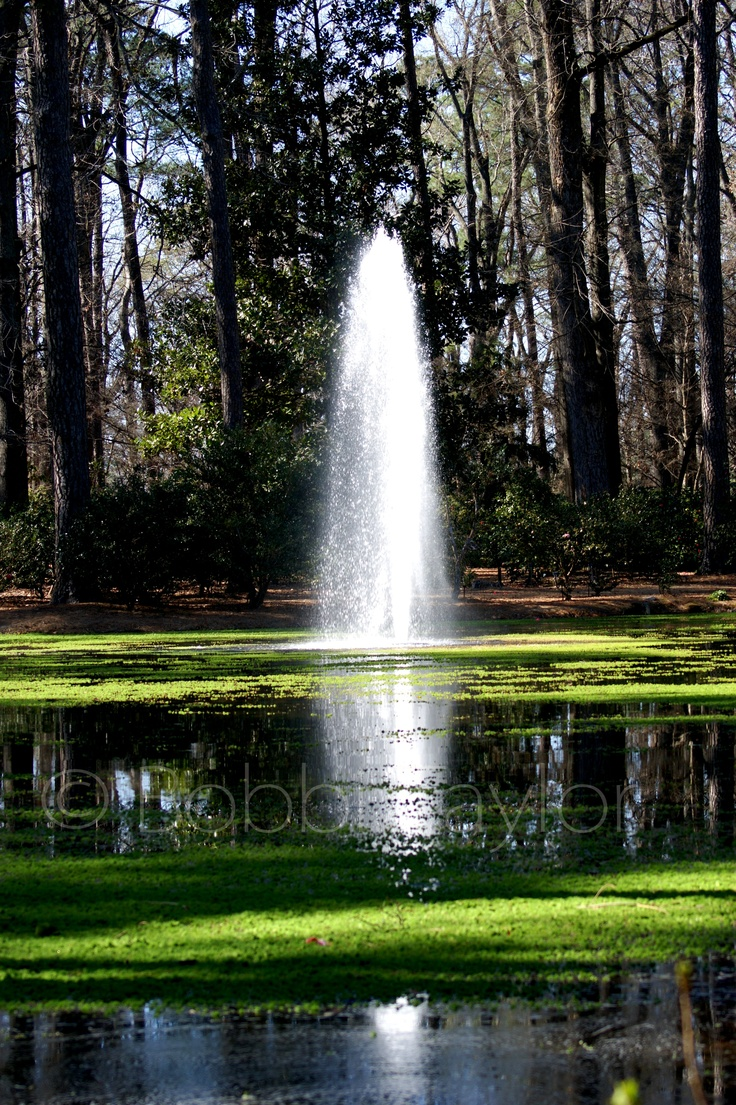 Norfolk Botanical Gardens The Norfolk Botanical Garden Is