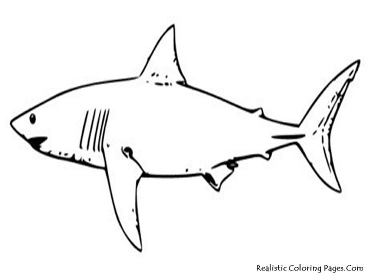 tropical fish coloring pages tropical fish coloring pages - Tropical Fish Coloring Pages