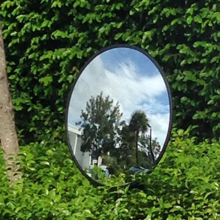 #mirror #reflections #textures #streetphotography #streetphoto #nature #trees #reflection #sunny #miami