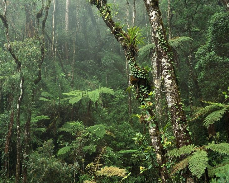 rainforest | Tropical Rainforest Malaysia Indonesia Outdoors Adventure Skill Guide ...